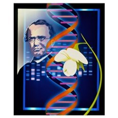Computer artwork of the botanist Gregor Mendel Poster