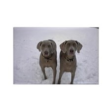 Snow Weims Rectangle Magnet
