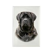 Mastiff 9Y363D-076 Rectangle Magnet (100 pack)