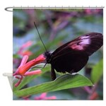 Butterfly Photo Shower Curtain