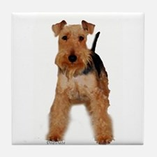 Welsh Terrier portrait Tile Coaster