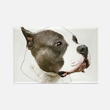 American pit bull terrier copy.png Rectangle Magne