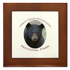 Great Smoky Mountains National Park...Black Bear F