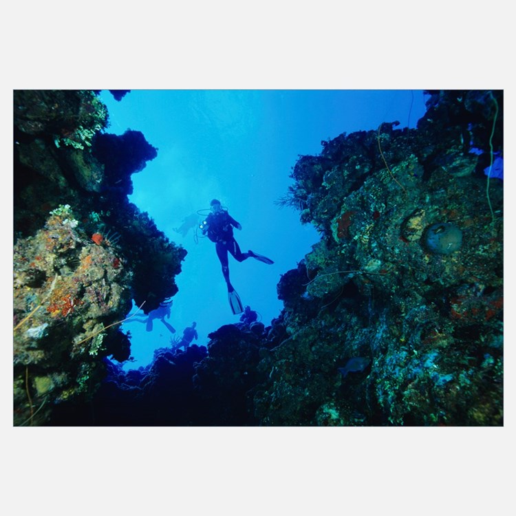 Scuba diving wall art scuba diving wall decor for Diving and fishing mural