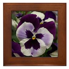 Purple Pansy Framed Tile
