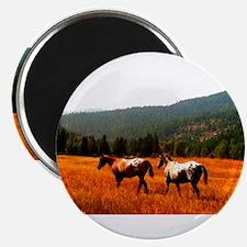 "Appaloosas 2.25"" Magnet (100 pack)"