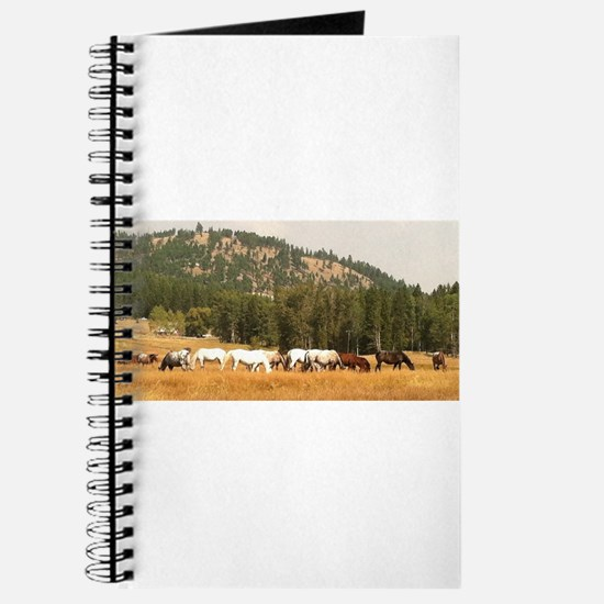 Beautiful Appaloosa Herd Journal