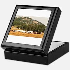 Beautiful Appaloosa Herd Keepsake Box