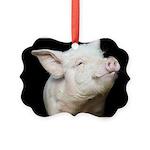 Cutest Pig Picture Ornament