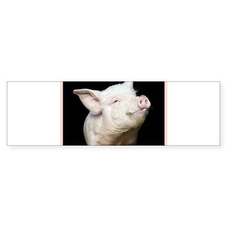 Cutest Pig Sticker (Bumper)