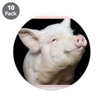 Cutest Pig 3.5