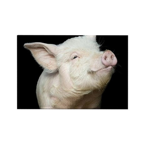 Cutest Pig Rectangle Magnet (100 pack)