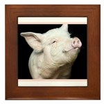 Cutest Pig Framed Tile