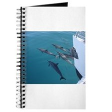 Dolphins Lead The Way Journal