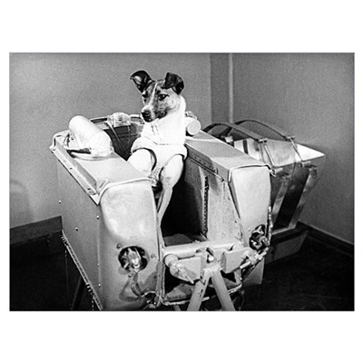 Laika the space dog Canvas Art