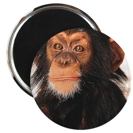 Monkey! Magnet
