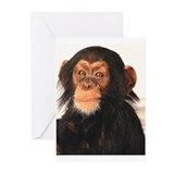 Monkey Greeting Cards (10 Pack)
