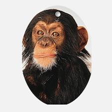 Monkey! Oval Ornament