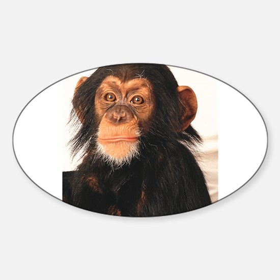 Monkey! Oval Decal