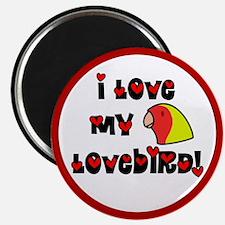 Anime Lutino Pf Lovebird Magnet