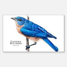 Eastern Bluebird Sticker (Rectangle)