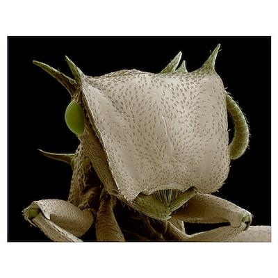 Turtle ant's head, SEM Poster