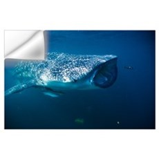 Whale shark and pilot fish Wall Decal
