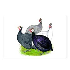 Four Guineafowl Postcards (Package of 8)