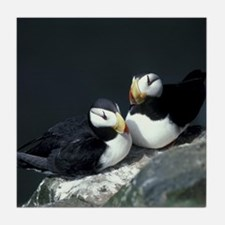 Puffin Pair Tile Coaster