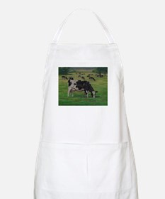 Holstein Milk Cow in Pasture Apron