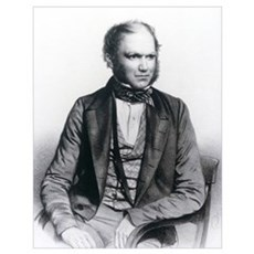 Lithograph of Charles Darwin aged 40 Poster