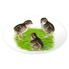 Bobwhite Quail Chicks Decal