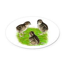 Bobwhite Quail Chicks Oval Car Magnet