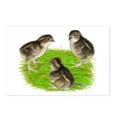 Bobwhite Quail Chicks Postcards (Package of 8)