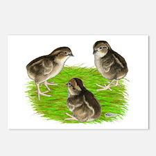 Bobwhite Quail Chicks Postcards (Package of 8)
