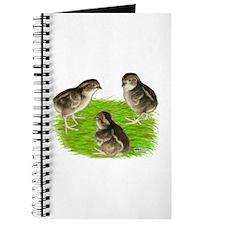 Bobwhite Quail Chicks Journal