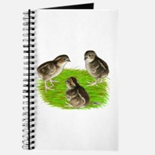 Bobwhite Quail Chicks Journal