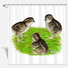 Bobwhite Quail Chicks Shower Curtain