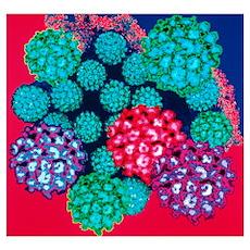 Papilloma viruses Poster