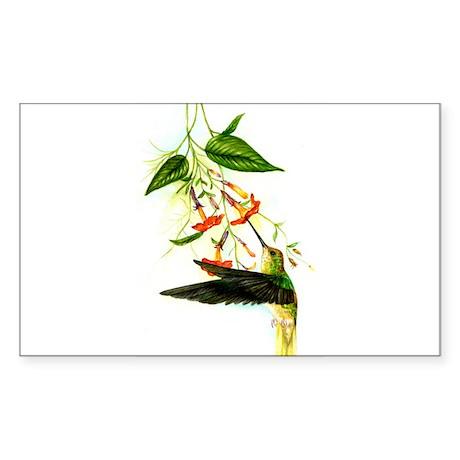 hummingbird Sticker (Rectangle)