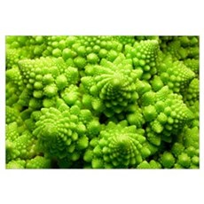 Romanesco cauliflower head Canvas Art