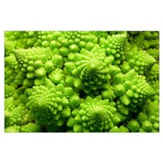 Romanesco cauliflower head Poster