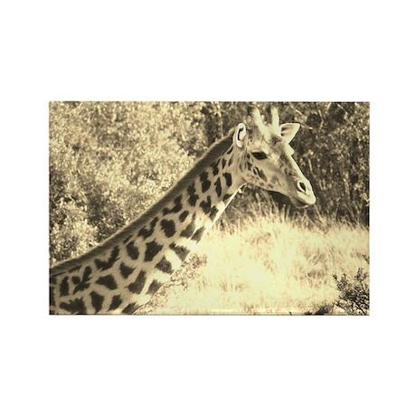 sepia giraffe morning kenya collection Rectangle M