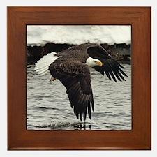 Eagle, Fish in Talons Framed Tile