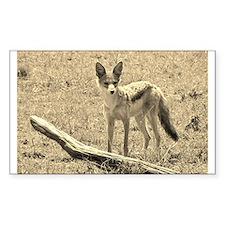 sepia silver backed jackal kenya collection Sticke