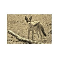 sepia silver backed jackal kenya collection Rectan