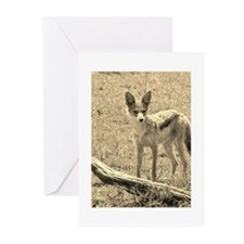 sepia silver backed jackal kenya collection Greeti