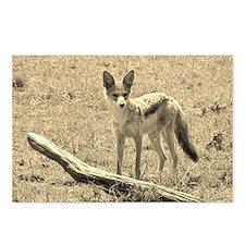 sepia silver backed jackal kenya collection Postca