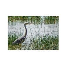 grey heron kenya collection Rectangle Magnet