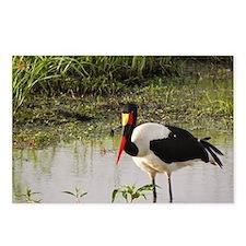saddle billed stork kenya collection Postcards (Pa